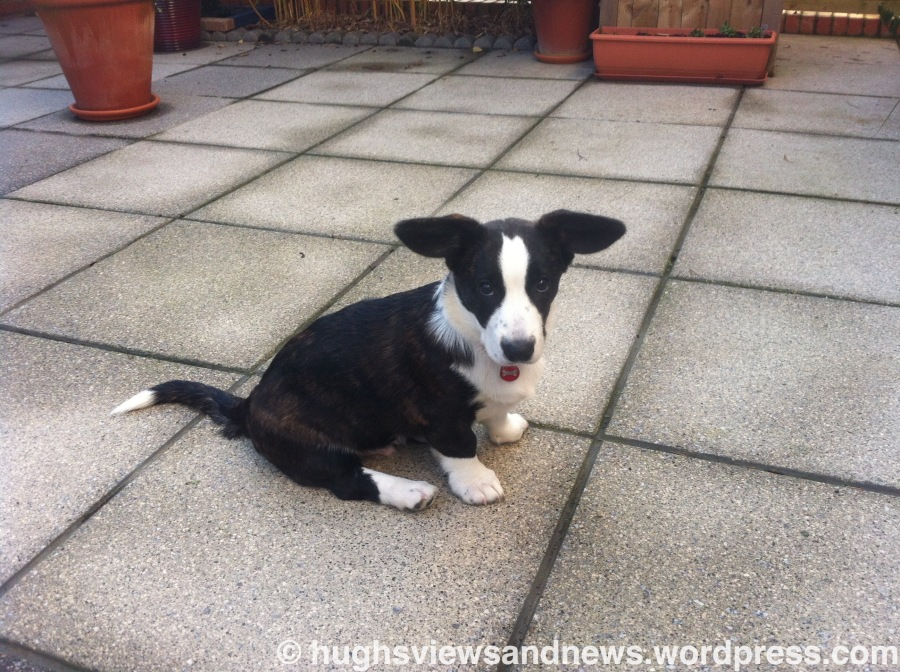 Toby Veale as a Puppy