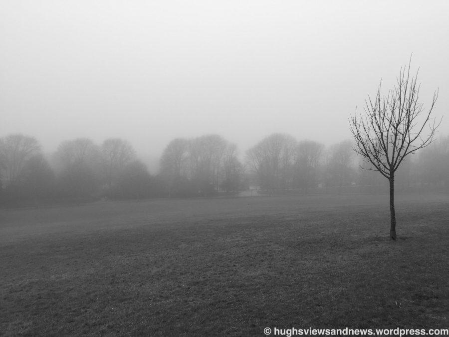 #death #trees #fog #life