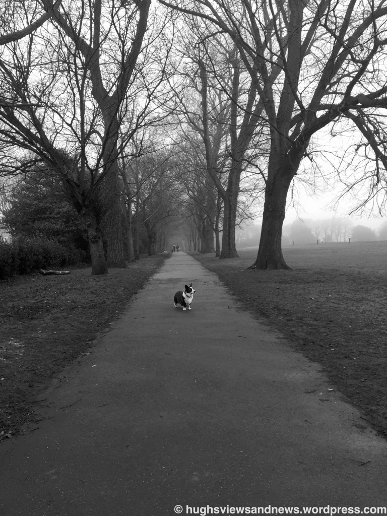 Foggy Morning Walk with Toby