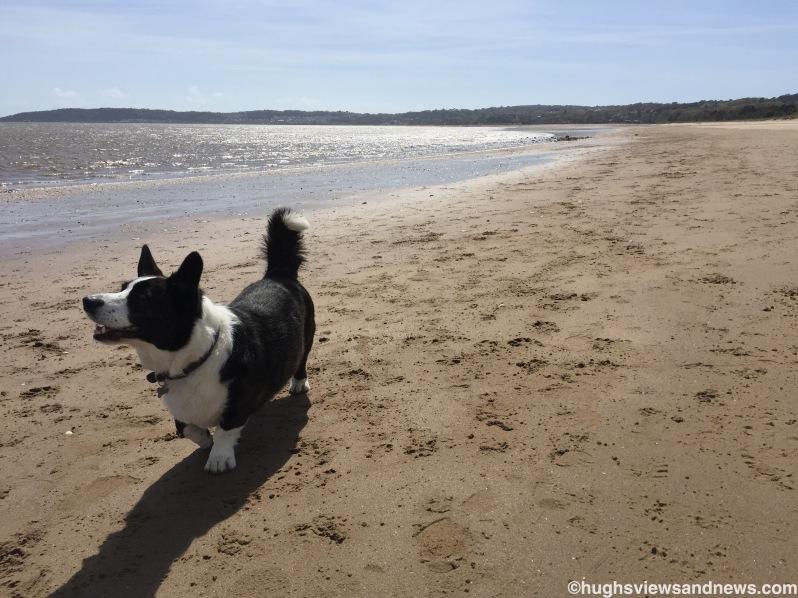Toby on the beach