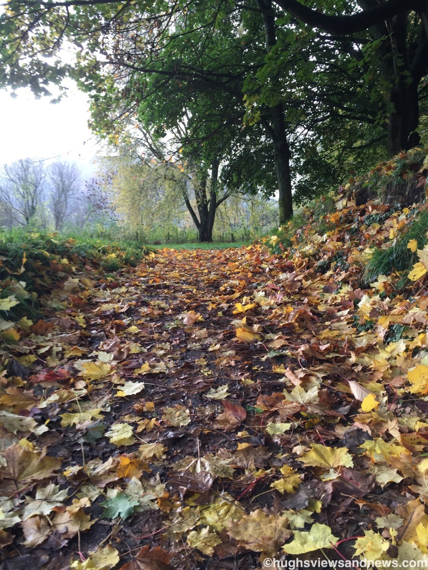 Autumn leaves on a path