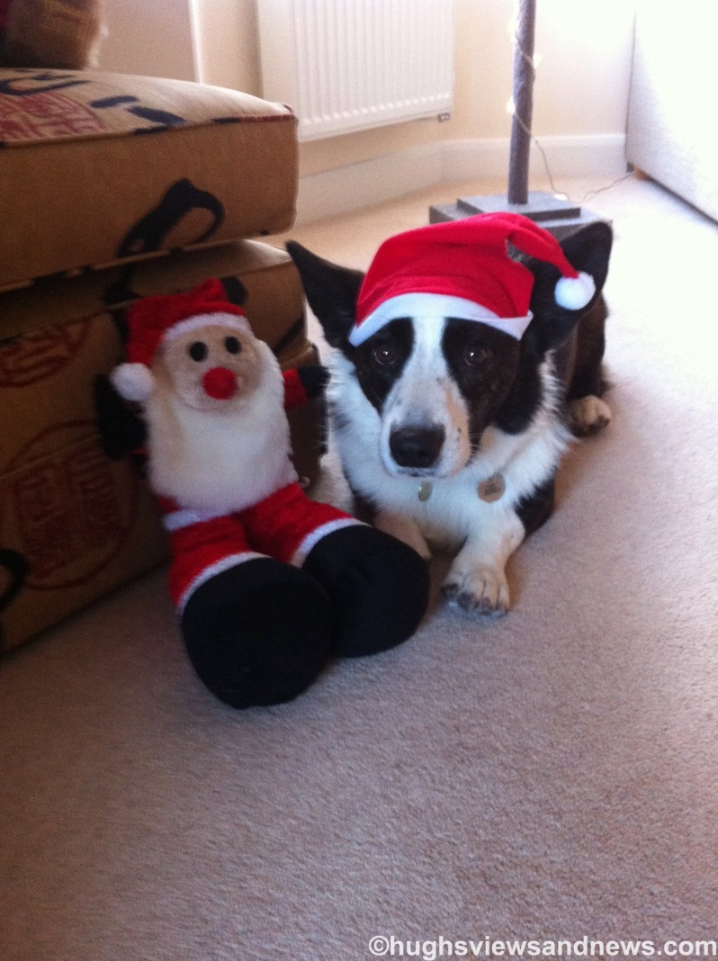 Toby in a Santa Hat