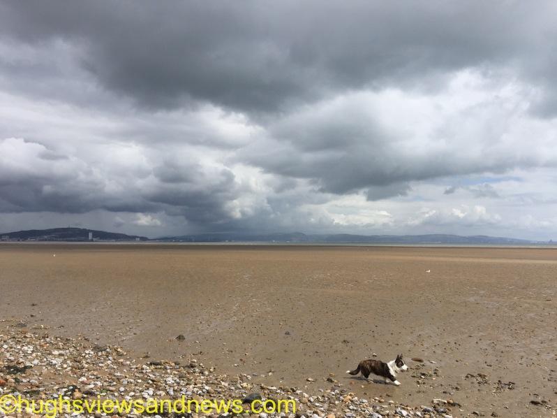 #photography #WordPress #space #dogs #corgis