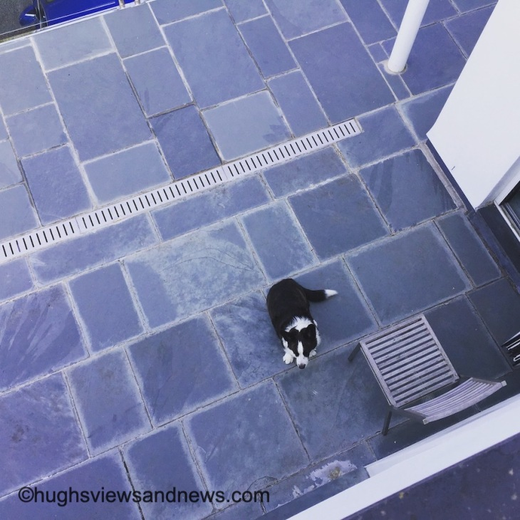 Photo looking down on some grey tiles which a dog is sat on.