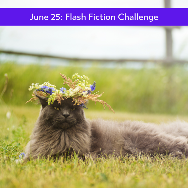 Image of a fluffy cat with a flower crown on its head, taking a rest on grass.
