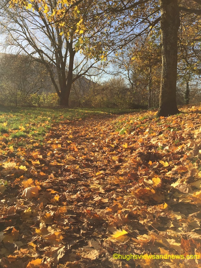 Photo of autumnal leaves on the ground under a tree