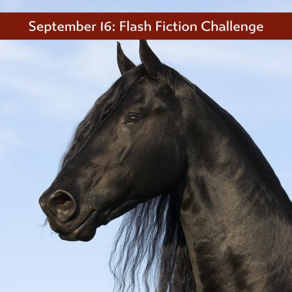 Image of a big, black horse